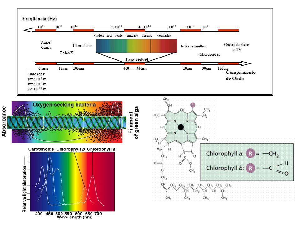 Luz visível Violeta azul verde amarelo laranja vermelho Ultravioleta Raios X RaiosGama Ondas de rádio e TV e TV Microondas Infravermelhos Comprimento
