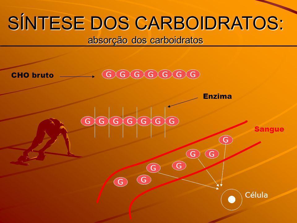 GGGGGGG GGGGGGG G G G GG G G Célula SÍNTESE DOS CARBOIDRATOS: absorção dos carboidratos Sangue CHO bruto Enzima