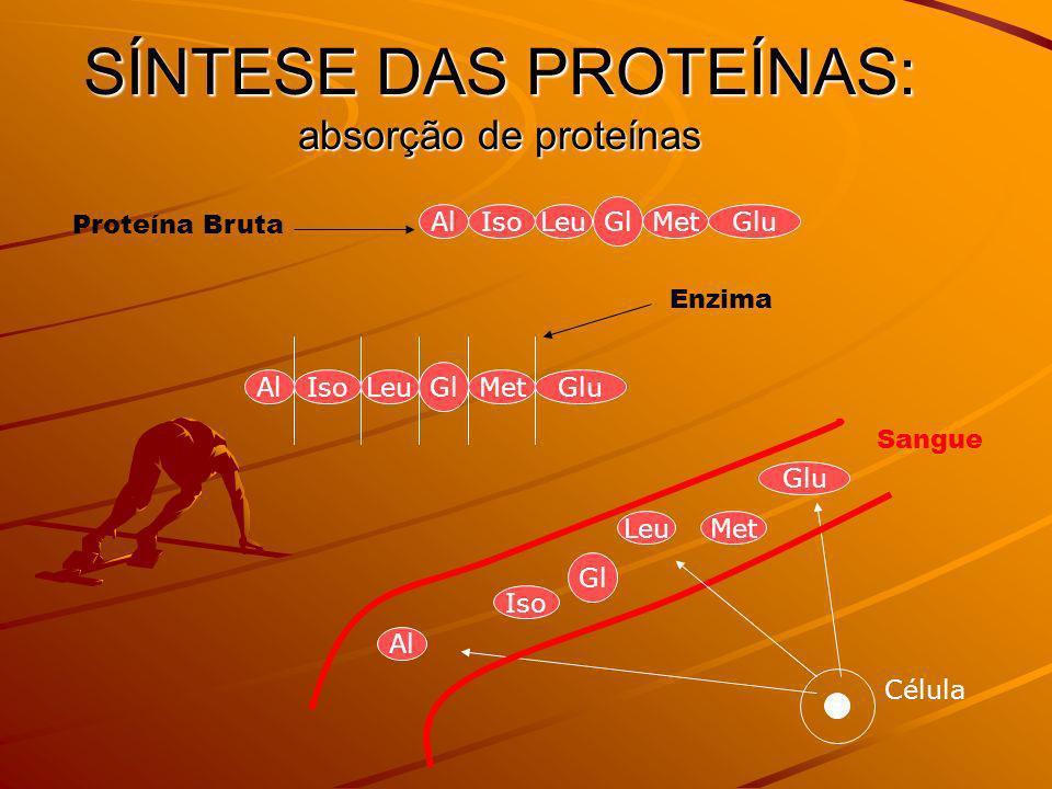 SÍNTESE DAS PROTEÍNAS: absorção de proteínas AlIsoLeu Gl MetGlu Célula AlIsoLeu Gl MetGlu Proteína Bruta Sangue Al Iso Leu Gl Met Glu Enzima