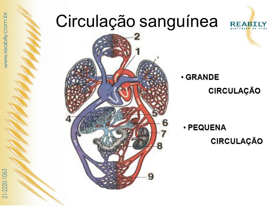 Circulação sanguínea GRANDE GRANDE CIRCULAÇÃO CIRCULAÇÃO PEQUENA PEQUENACIRCULAÇÃO