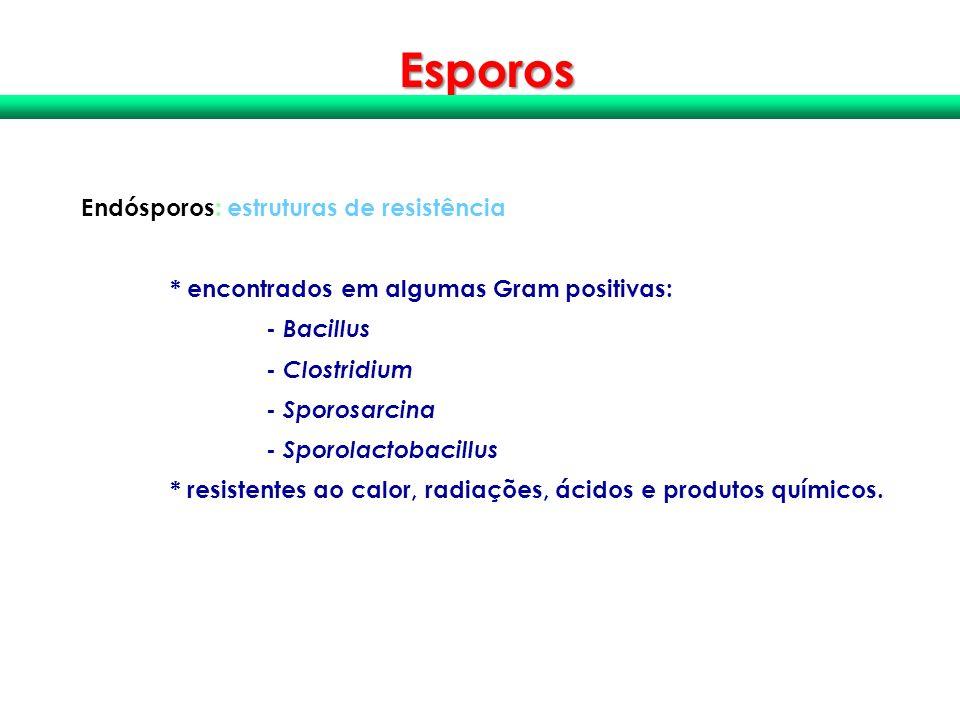 Esporos Endósporos: estruturas de resistência * encontrados em algumas Gram positivas: - Bacillus - Clostridium - Sporosarcina - Sporolactobacillus *
