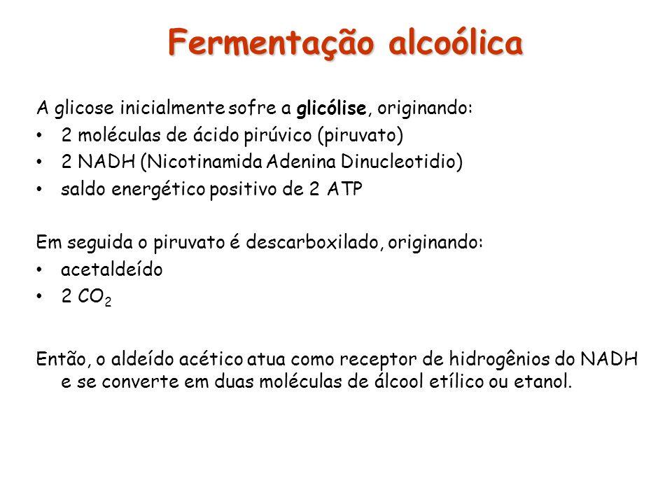 Fermentação alcoólica Fermentação alcoólica A glicose inicialmente sofre a glicólise, originando: 2 moléculas de ácido pirúvico (piruvato) 2 NADH (Nic
