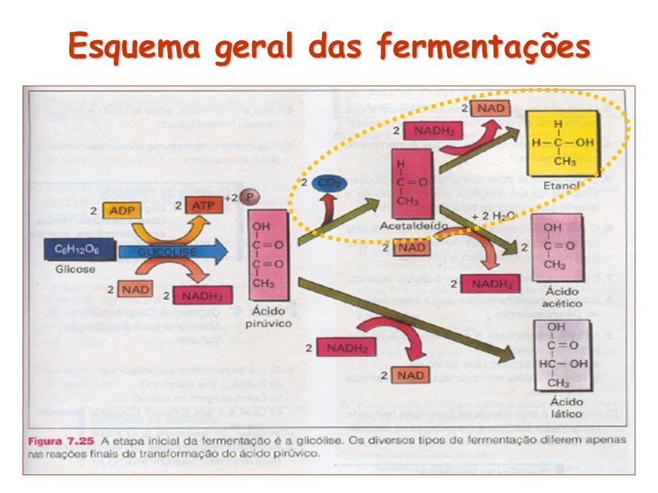 Esquema geral das fermentações