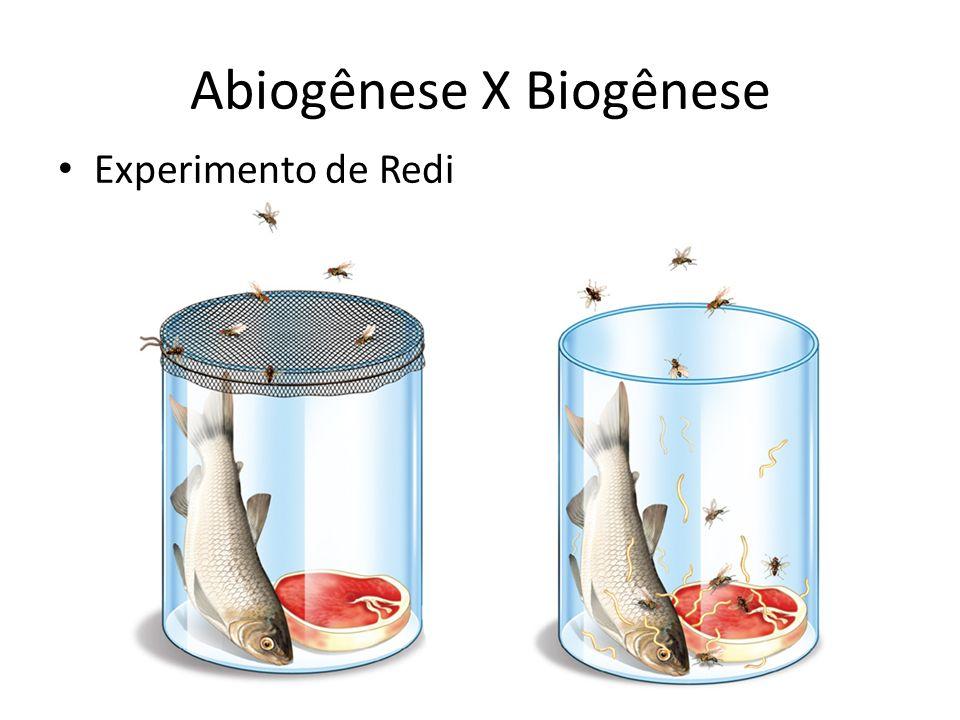 Abiogênese X Biogênese Experimento de Redi