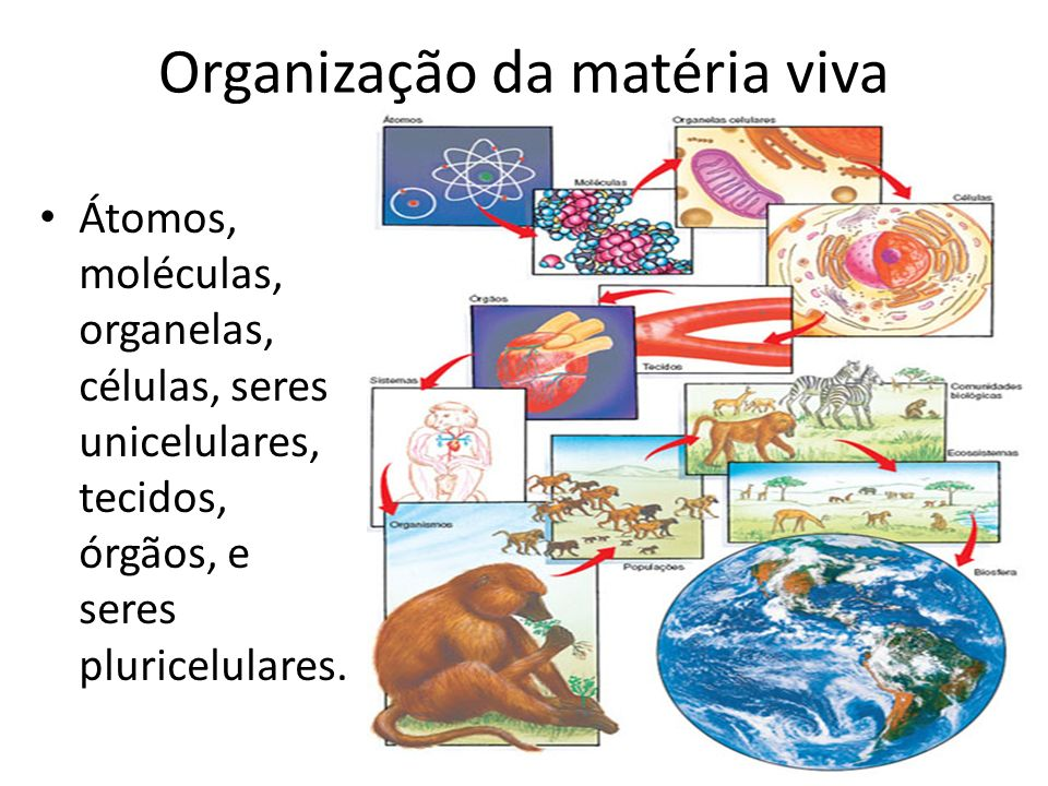 Organização da matéria viva Átomos, moléculas, organelas, células, seres unicelulares, tecidos, órgãos, e seres pluricelulares.