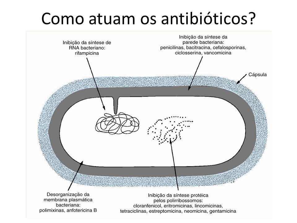 FIXAÇÃO DO NITROGÊNIO ATMOSFÉRICO Bactérias fixadoras de N2 nos nódulos de raízes de leguminosas Bactérias fixadoras de N2 no solo NO 3 (amônia) Absorção de NH3 por algumas plantas Assimilação pelos herbívoros Excreção Decompositores Morte e decomposição Nitrosomonas NO 2 (nitrito) N 2 atmosférico CICLOS BIOGEOQUÍMICOS DO NITROGÊNIO