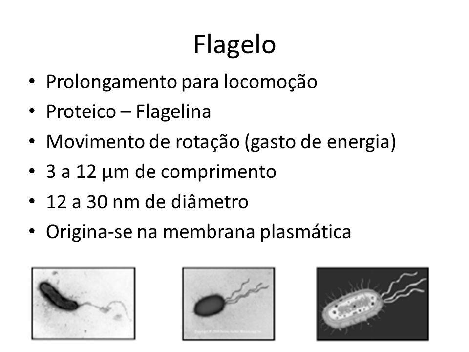 Flagelo Prolongamento para locomoção Proteico – Flagelina Movimento de rotação (gasto de energia) 3 a 12 μm de comprimento 12 a 30 nm de diâmetro Orig