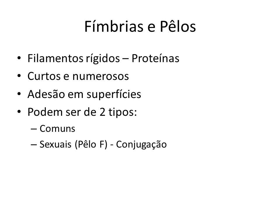Fímbrias e Pêlos Filamentos rígidos – Proteínas Curtos e numerosos Adesão em superfícies Podem ser de 2 tipos: – Comuns – Sexuais (Pêlo F) - Conjugaçã