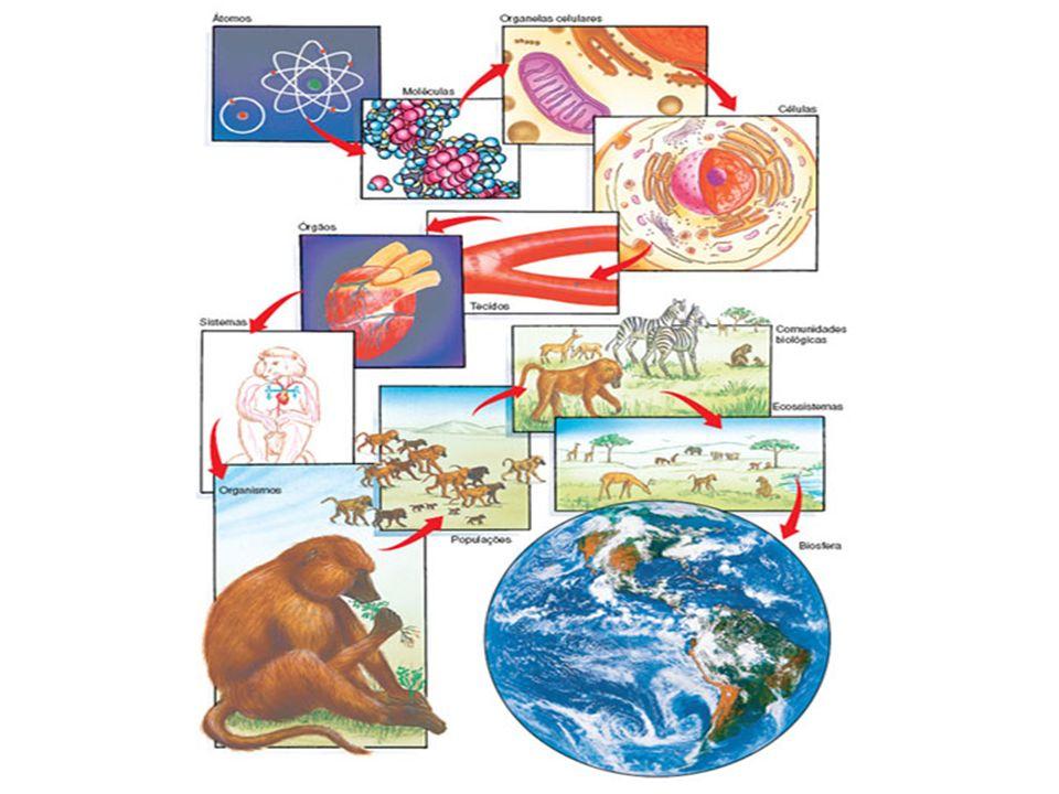 Hipótese endossimbiótica ou simbiogênica (viver juntos).