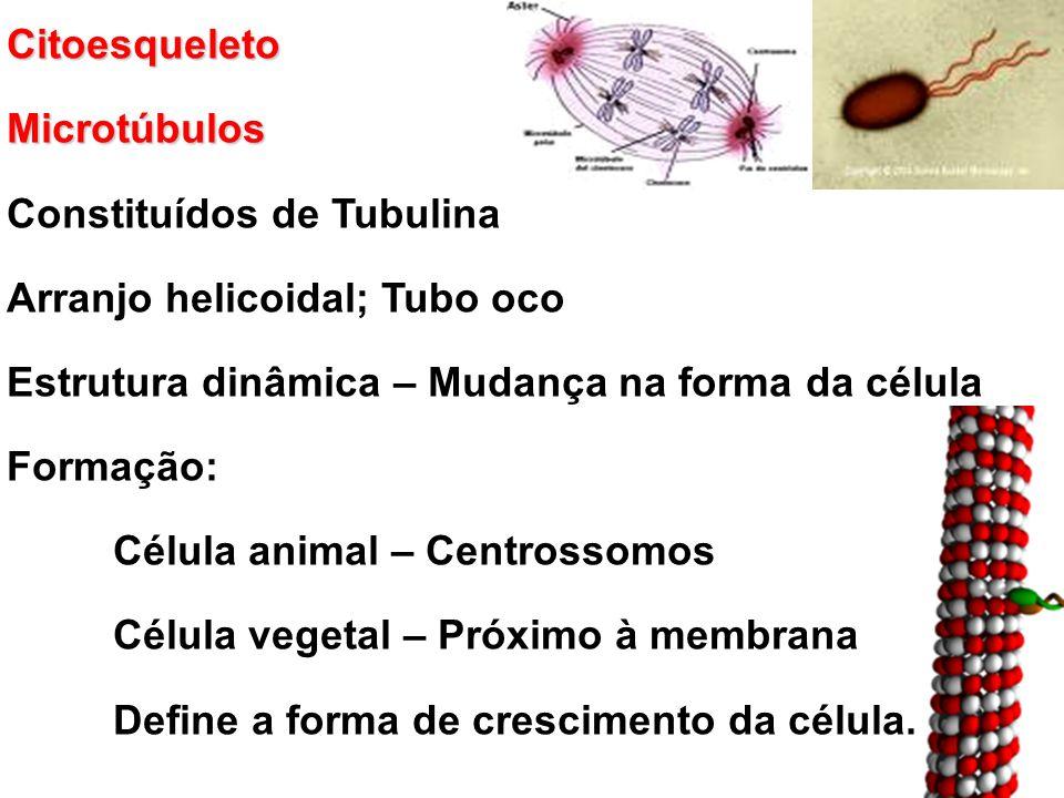 CitoesqueletoMicrotúbulos Constituídos de Tubulina Arranjo helicoidal; Tubo oco Estrutura dinâmica – Mudança na forma da célula Formação: Célula animal – Centrossomos Célula vegetal – Próximo à membrana Define a forma de crescimento da célula.