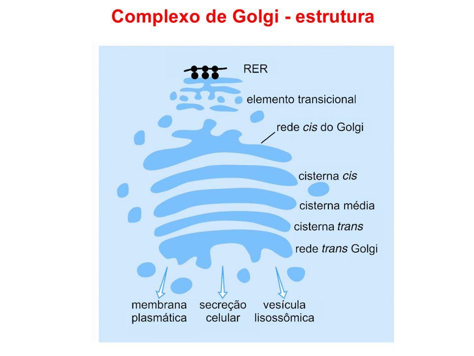 Complexo de Golgi - estrutura