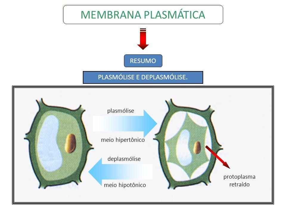 RESUMO plasmólise meio hipertônico deplasmólise meio hipotônico protoplasma retraído PLASMÓLISE E DEPLASMÓLISE. MEMBRANA PLASMÁTICA