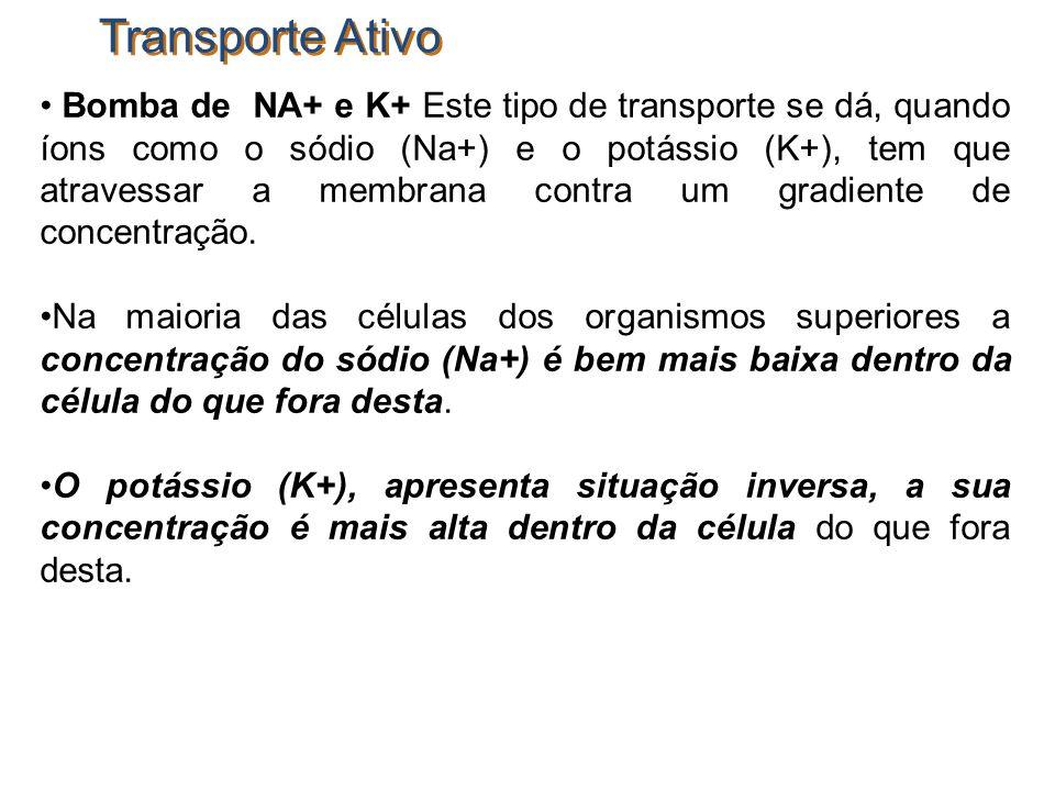 Transporte Ativo Bomba de NA+ e K+ Este tipo de transporte se dá, quando íons como o sódio (Na+) e o potássio (K+), tem que atravessar a membrana cont