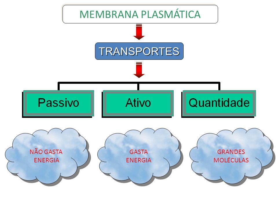 CLASMOCITOSE MEMBRANA PLASMÁTICA RESÍDUOS Vacúolo resídual É a eliminação dos resíduos da digestão intracelular.