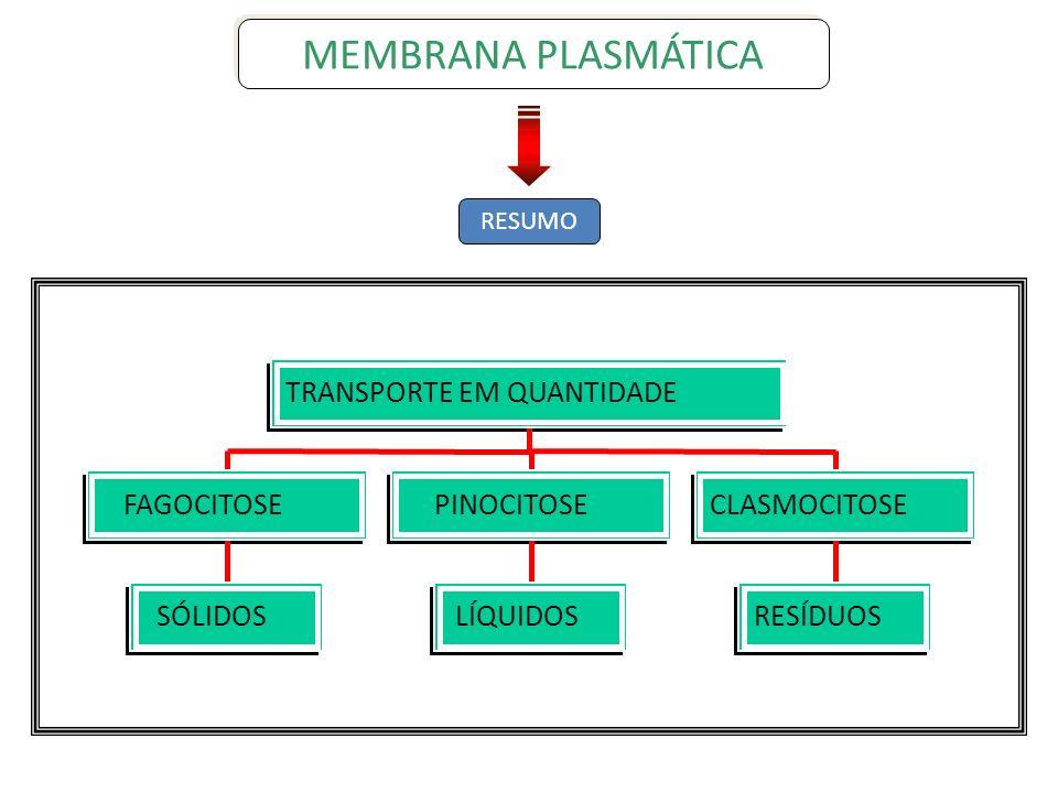 SÓLIDOS FAGOCITOSE LÍQUIDOS PINOCITOSE RESÍDUOS CLASMOCITOSE TRANSPORTE EM QUANTIDADE RESUMO MEMBRANA PLASMÁTICA