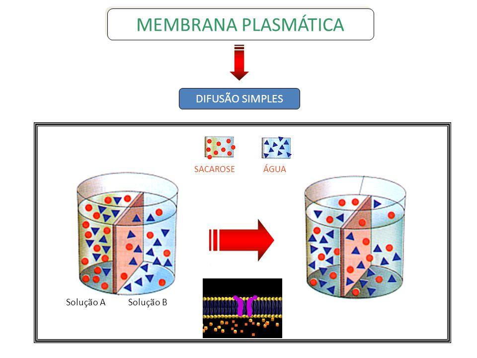 Transporte Ativo Bomba de NA+ e K+ Este tipo de transporte se dá, quando íons como o sódio (Na+) e o potássio (K+), tem que atravessar a membrana contra um gradiente de concentração.