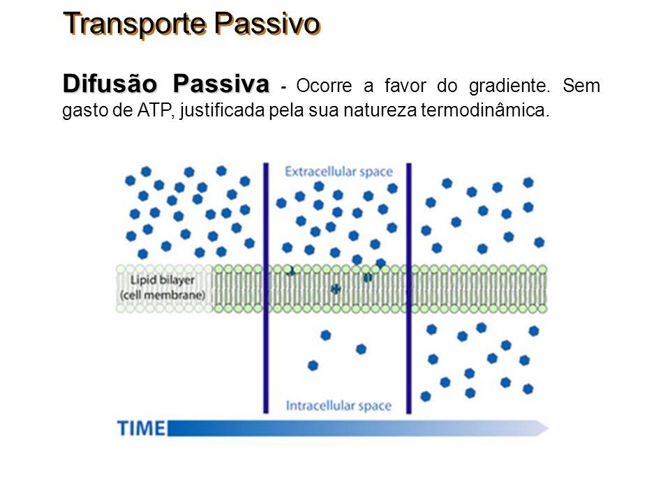 Transporte Passivo Difusão Passiva Difusão Passiva - Ocorre a favor do gradiente. Sem gasto de ATP, justificada pela sua natureza termodinâmica.