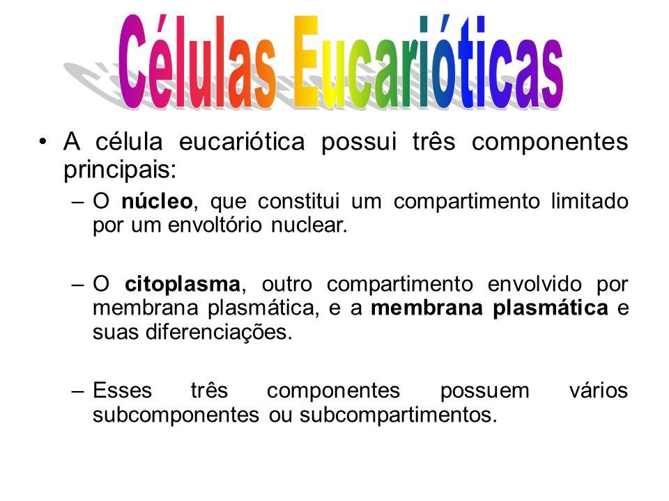 Existe grande variabilidade na forma das células eucarióticas.