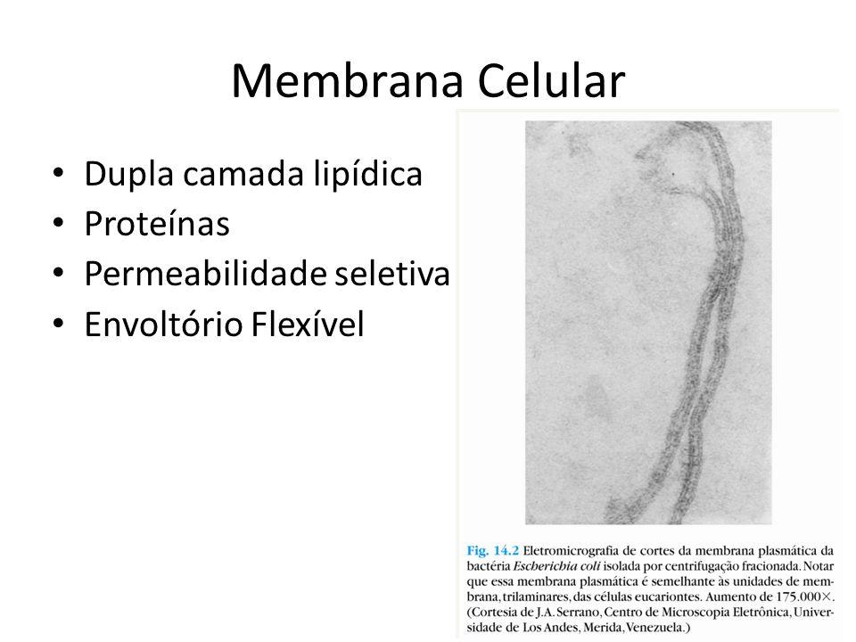 Membrana Celular Dupla camada lipídica Proteínas Permeabilidade seletiva Envoltório Flexível