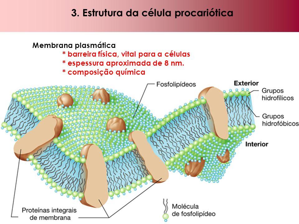 3. Estrutura da célula procariótica Membrana plasmática * barreira física, vital para a células * espessura aproximada de 8 nm. * composição química