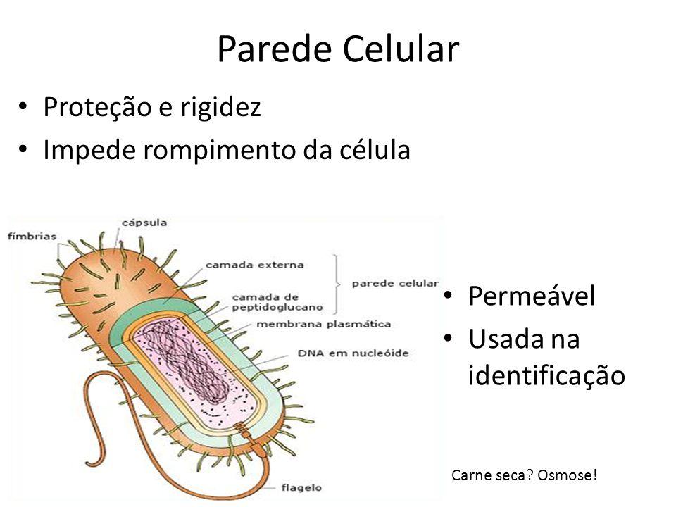 Parede Celular Proteção e rigidez Impede rompimento da célula Permeável Usada na identificação Carne seca? Osmose!