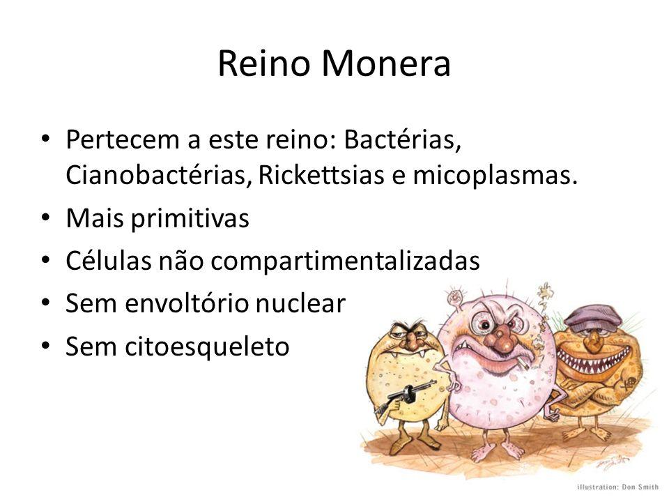 Reino Monera Pertecem a este reino: Bactérias, Cianobactérias, Rickettsias e micoplasmas. Mais primitivas Células não compartimentalizadas Sem envoltó