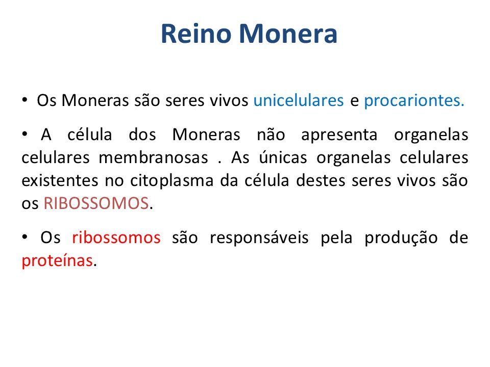 Reino Monera Os Moneras são seres vivos unicelulares e procariontes. A célula dos Moneras não apresenta organelas celulares membranosas. As únicas org