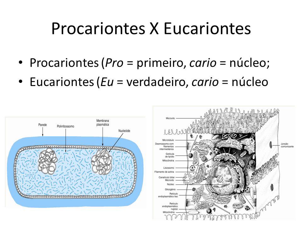 Procariontes X Eucariontes Procariontes (Pro = primeiro, cario = núcleo; Eucariontes (Eu = verdadeiro, cario = núcleo