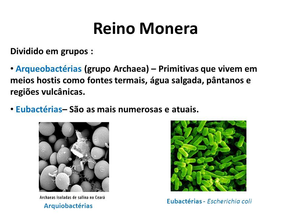 Reino Monera Dividido em grupos : Arqueobactérias (grupo Archaea) – Primitivas que vivem em meios hostis como fontes termais, água salgada, pântanos e