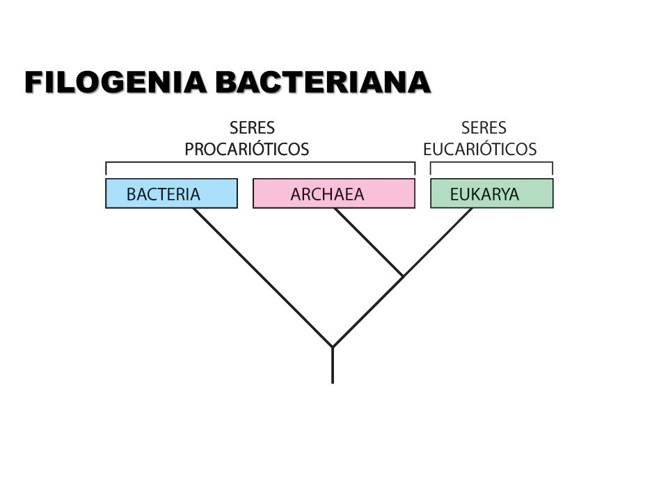 FILOGENIA BACTERIANA