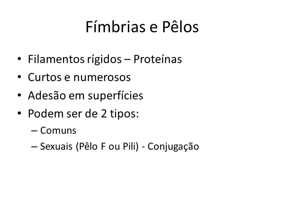 Fímbrias e Pêlos Filamentos rígidos – Proteínas Curtos e numerosos Adesão em superfícies Podem ser de 2 tipos: – Comuns – Sexuais (Pêlo F ou Pili) - C