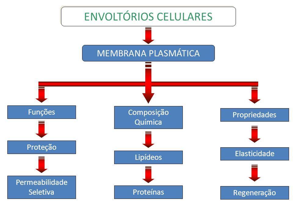 ENVOLTÓRIOS CELULARES MEMBRANA PLASMÁTICA Funções Proteção Permeabilidade Seletiva Composição Química Lipídeos Proteínas Propriedades Elasticidade Reg