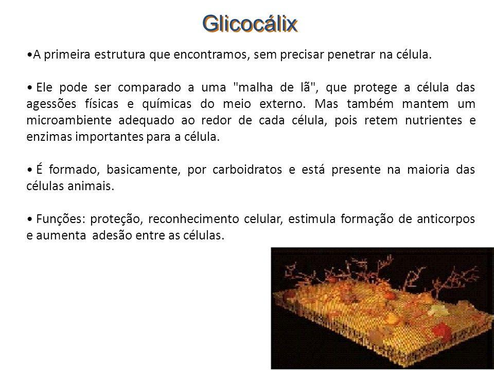 Glicocálix A primeira estrutura que encontramos, sem precisar penetrar na célula. Ele pode ser comparado a uma