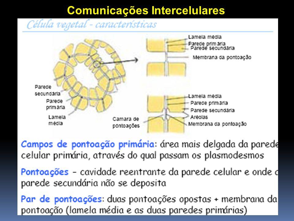 Comunicações Intercelulares