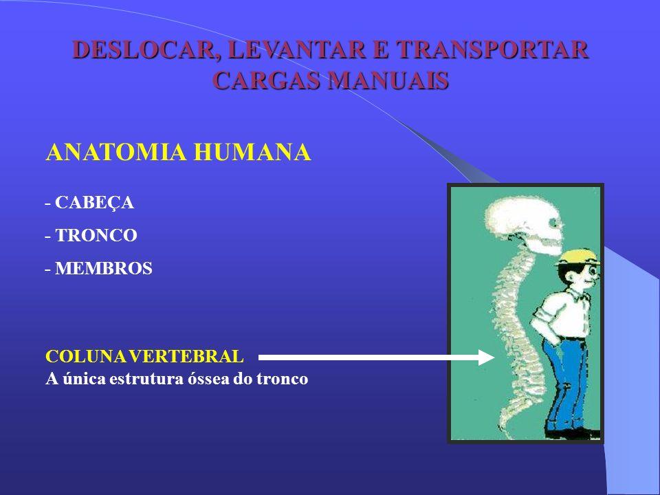DESLOCAR, LEVANTAR E TRANSPORTAR CARGAS MANUAIS ANATOMIA HUMANA - CABEÇA - TRONCO - MEMBROS COLUNA VERTEBRAL A única estrutura óssea do tronco