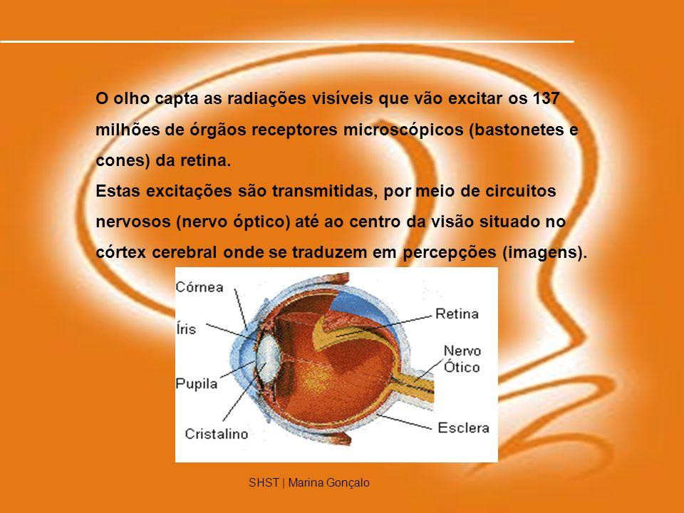 3 O olho capta as radiações visíveis que vão excitar os 137 milhões de órgãos receptores microscópicos (bastonetes e cones) da retina. Estas excitaçõe
