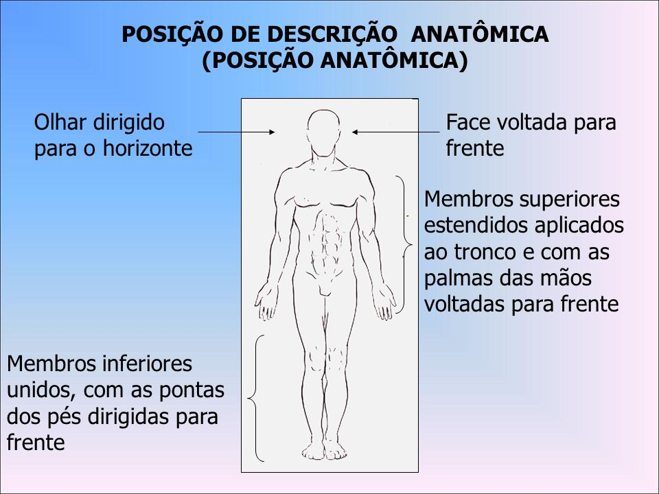 Planos Anatômicos Planos que delimitam o corpo (Tangenciais), superfícies planas imaginárias.