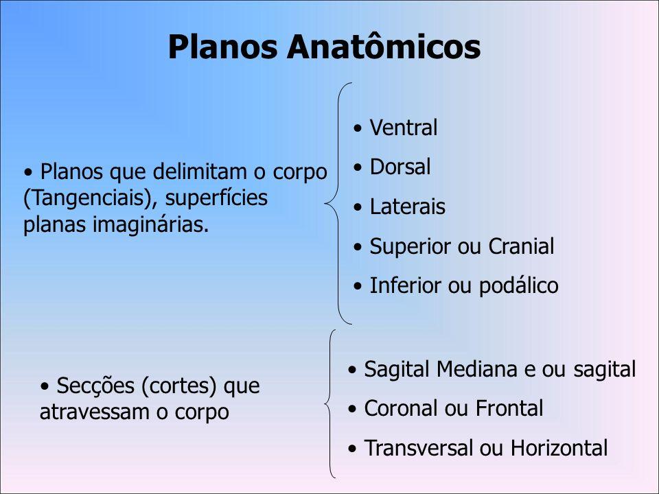 É constituída por: Dois amplos ossos, cujas regiões subdividem-se em ILÍACO, ÍSQUIO e PÚBIS, além da região central, na qual localizam-se o SACRO e o CÓCCIX.