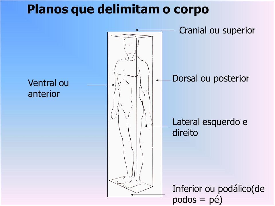 Secções (cortes) que atravessam o corpo Plano de secção mediana que divide o corpo em duas metades – direita e esquerda Crânio de um feto em vista superior para localizar a sagitta