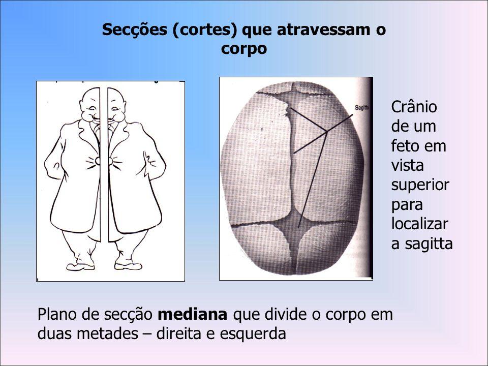 A lordose lombar desaparece, possibilitando que a coluna tome o formato de um C.