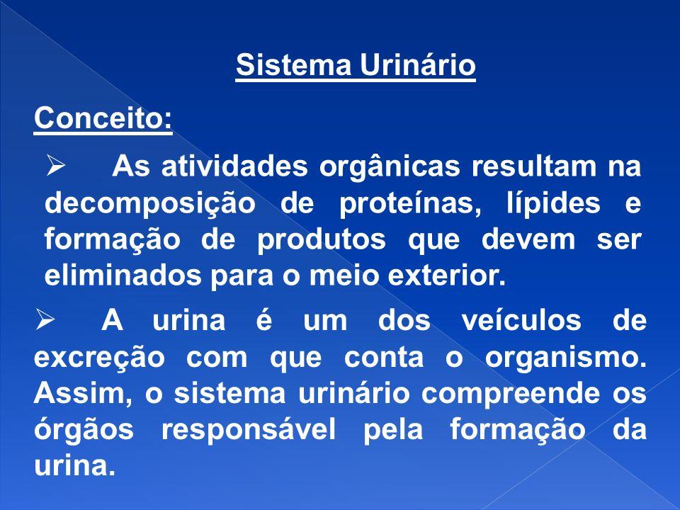 Sistema Urinário Conceito: As atividades orgânicas resultam na decomposição de proteínas, lípides e formação de produtos que devem ser eliminados para