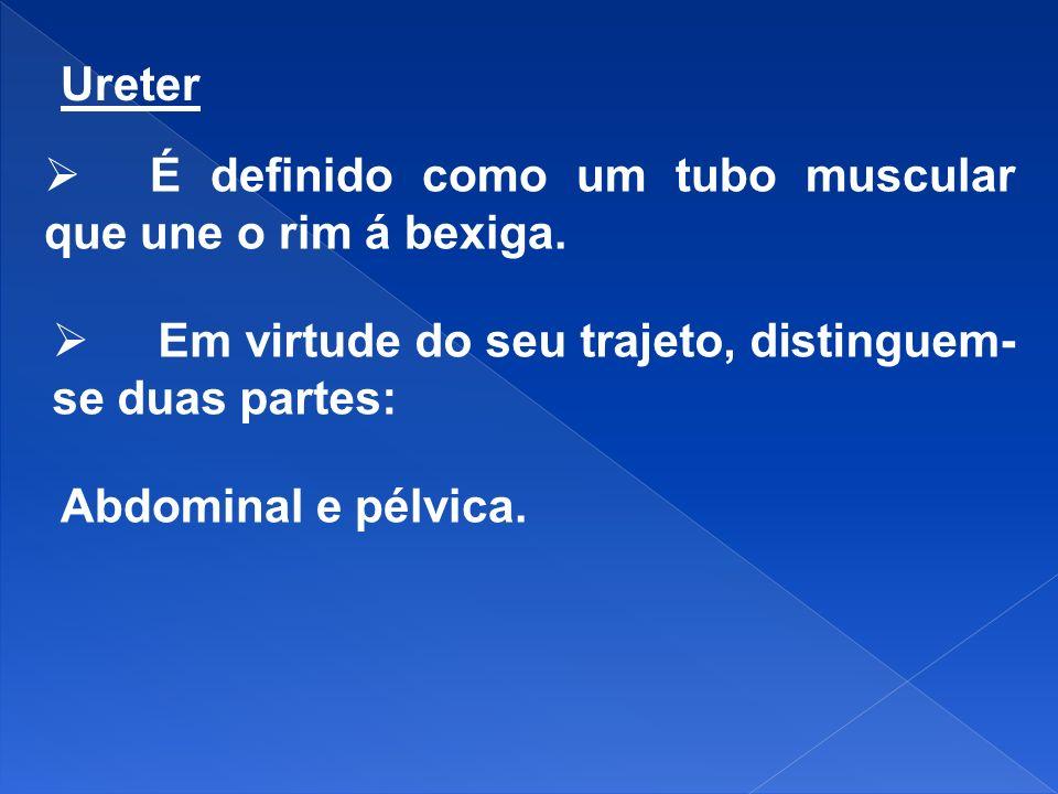 Ureter É definido como um tubo muscular que une o rim á bexiga. Em virtude do seu trajeto, distinguem- se duas partes: Abdominal e pélvica.