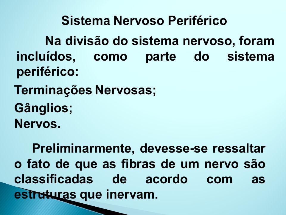 Sistema Nervoso Periférico Na divisão do sistema nervoso, foram incluídos, como parte do sistema periférico: Terminações Nervosas; Gânglios; Nervos. P