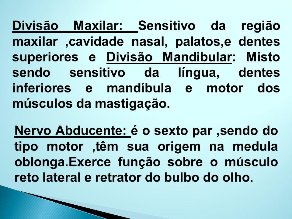 Divisão Maxilar: Sensitivo da região maxilar,cavidade nasal, palatos,e dentes superiores e Divisão Mandibular: Misto sendo sensitivo da língua, dentes