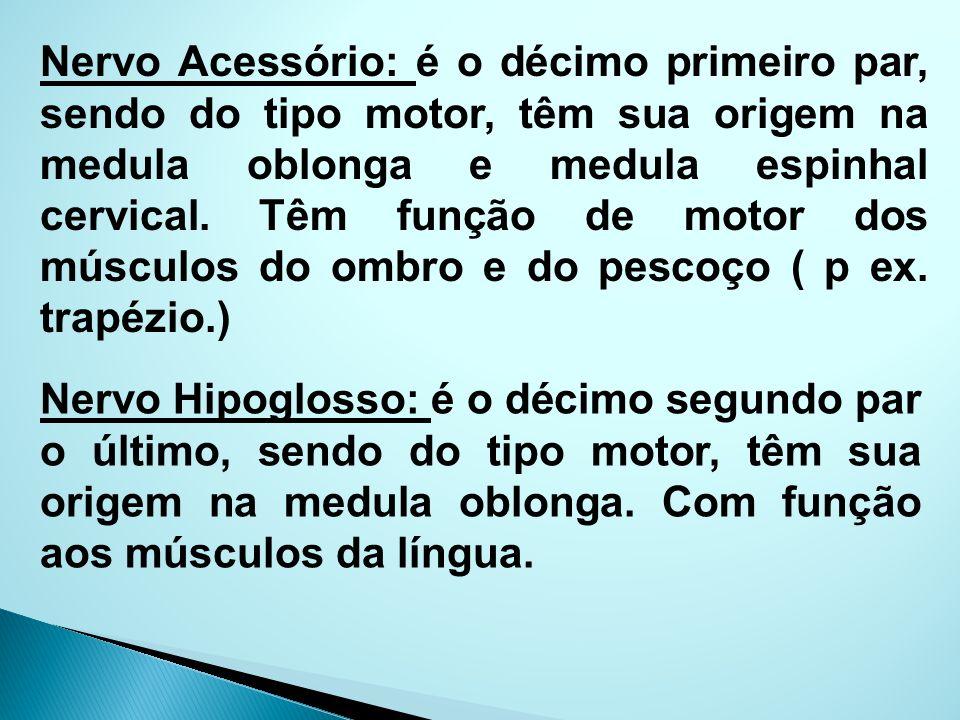 Nervo Acessório: é o décimo primeiro par, sendo do tipo motor, têm sua origem na medula oblonga e medula espinhal cervical. Têm função de motor dos mú