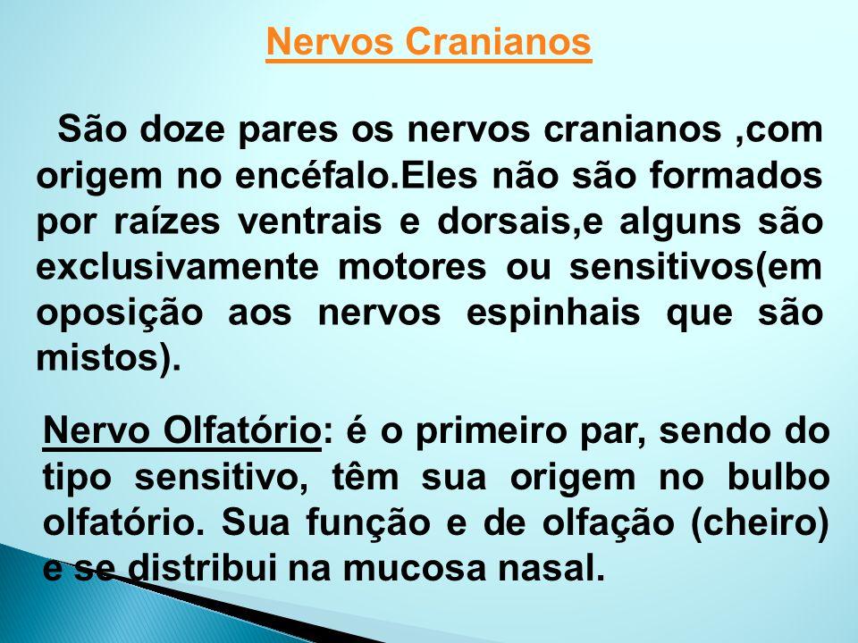 Nervos Cranianos São doze pares os nervos cranianos,com origem no encéfalo.Eles não são formados por raízes ventrais e dorsais,e alguns são exclusivam