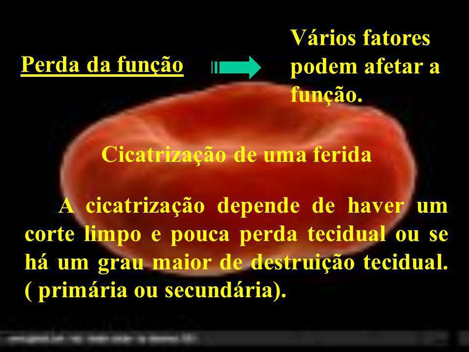 Perda da função Vários fatores podem afetar a função. Cicatrização de uma ferida A cicatrização depende de haver um corte limpo e pouca perda tecidual