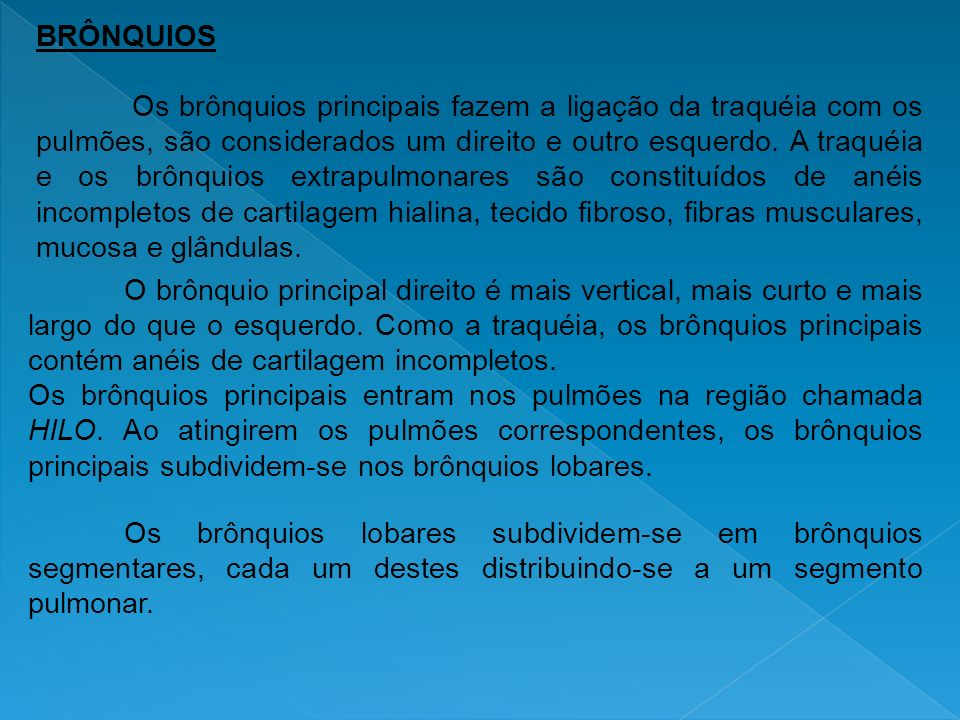 BRÔNQUIOS Os brônquios principais fazem a ligação da traquéia com os pulmões, são considerados um direito e outro esquerdo. A traquéia e os brônquios