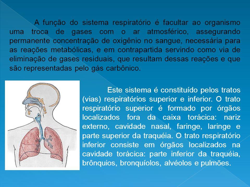 A função do sistema respiratório é facultar ao organismo uma troca de gases com o ar atmosférico, assegurando permanente concentração de oxigênio no s
