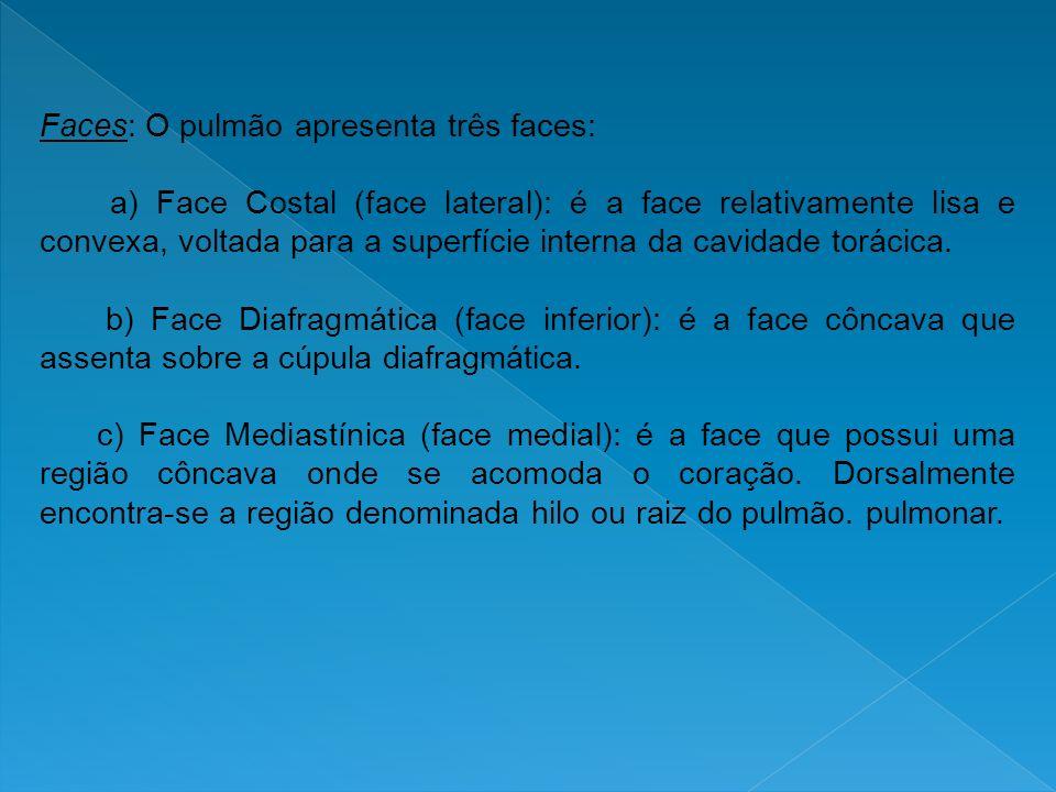 Faces: O pulmão apresenta três faces: a) Face Costal (face lateral): é a face relativamente lisa e convexa, voltada para a superfície interna da cavid